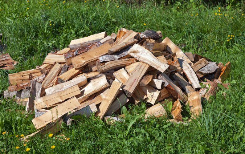 drva-tanja-želj-meditacija-sproščanje-1536x1024-1